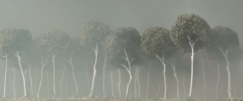 Il bosco Bianco, 2012